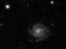 Feuerrad-Galaxie (M 101) im UMa